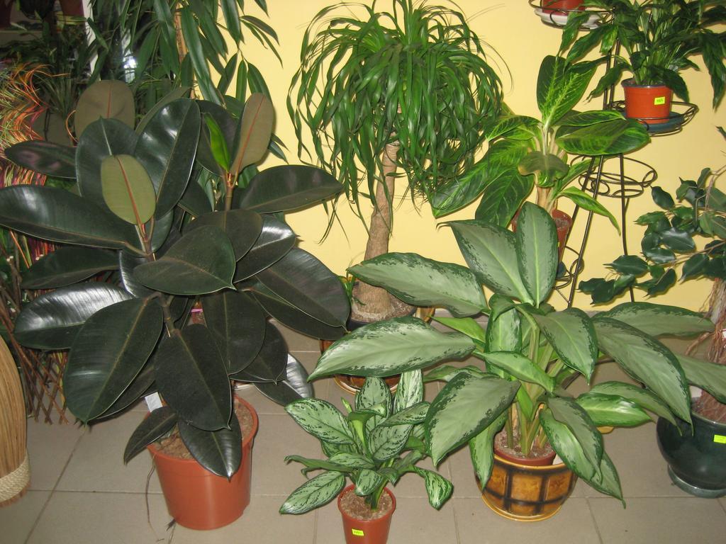 В августе не забудем о комнатных растениях.